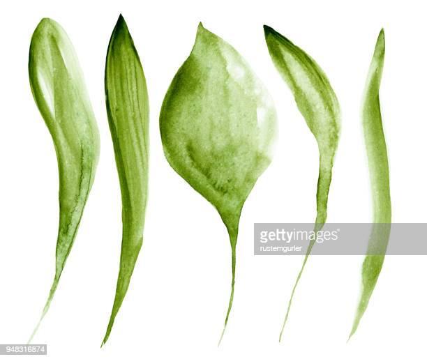 水彩で作られた緑の葉
