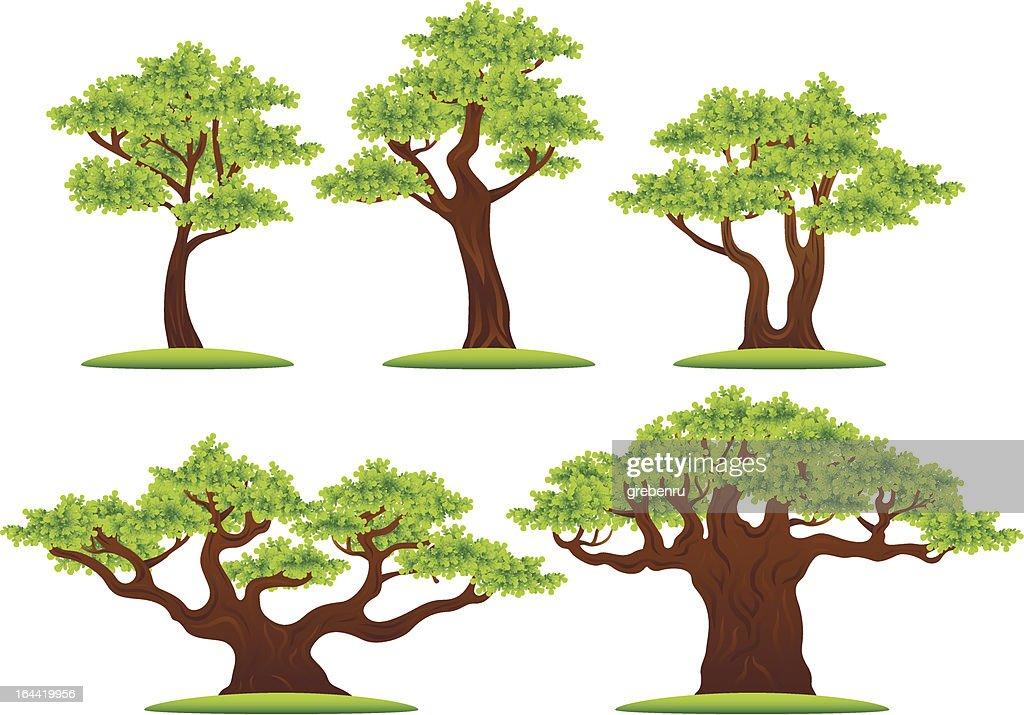 Green oak trees vector illustrations set