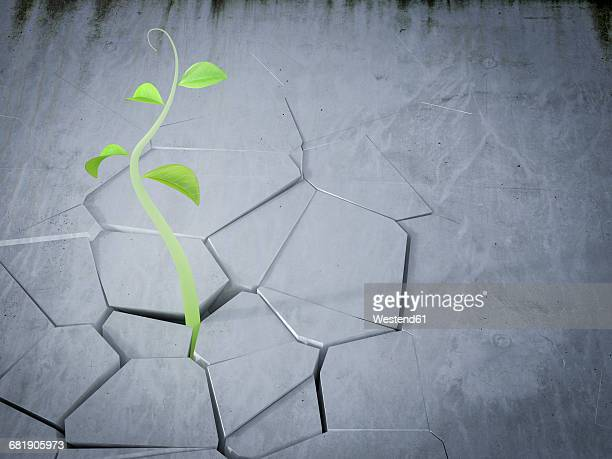 Green plant growing through crack in concrete