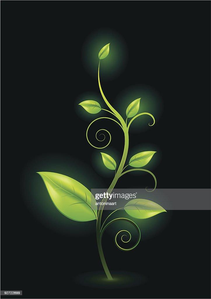 green plant shining in the dark