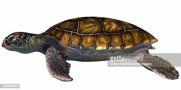 green sea turtle - green turtle stock illustrations, clip art, cartoons, & icons