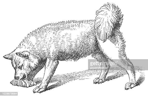 greenland dog - dog eating stock illustrations, clip art, cartoons, & icons