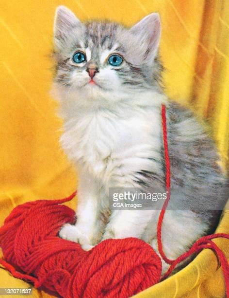 Grey Kitten With Yarn