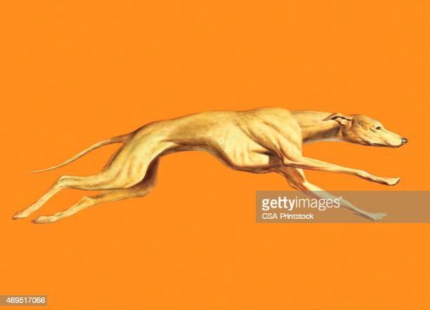 ilustraciones, imágenes clip art, dibujos animados e iconos de stock de greyhound perros corriendo - galgo