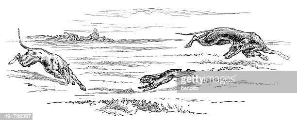 ilustraciones, imágenes clip art, dibujos animados e iconos de stock de greyhounds caza hare - galgo