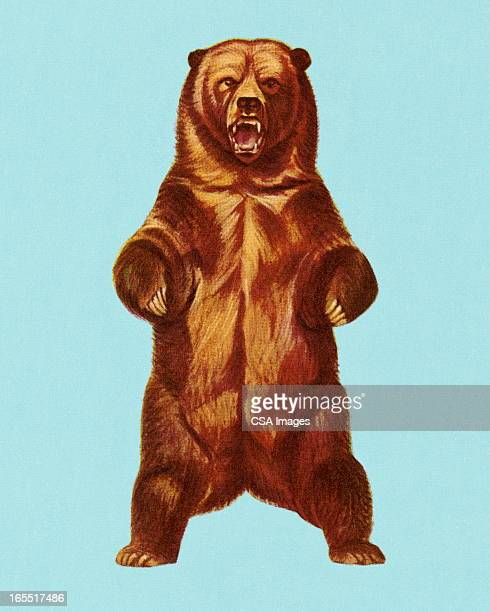 grizzly bear - anger stock illustrations