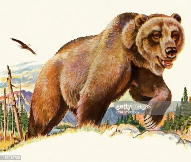 ilustraciones, imágenes clip art, dibujos animados e iconos de stock de grizzly bear - oso pardo