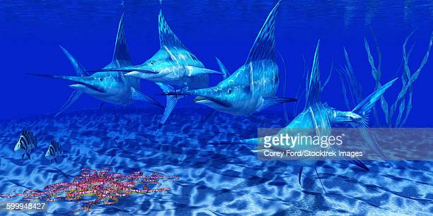 a group of blue marlin with two siamese tigerfish anda basket star. - marlin stock illustrations, clip art, cartoons, & icons