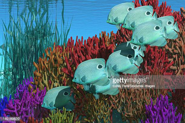 a group of butterflyfish swim over a coral reef. - butterflyfish stock illustrations, clip art, cartoons, & icons
