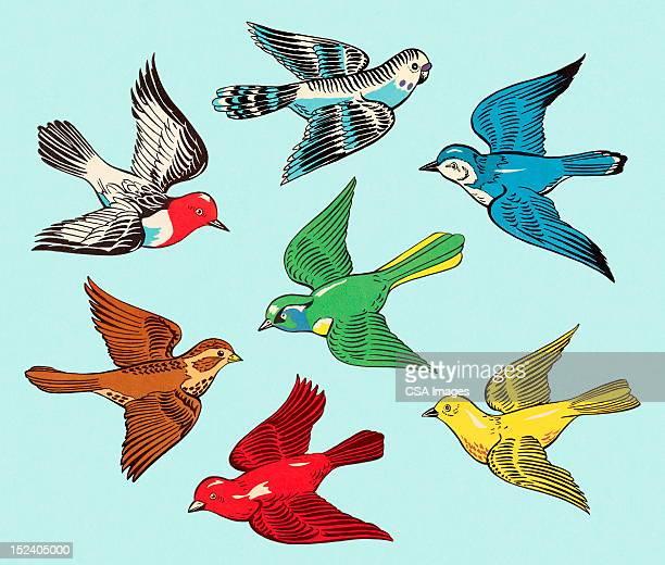 Grupo de pájaros coloridos