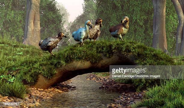 ilustrações, clipart, desenhos animados e ícones de a group of dodo birds crossing a natural bridge over a stream. - ilhas maurício