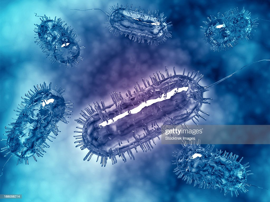 Group Of Escherichia Coli Bacteria Cells Commonly Known As E Coli E