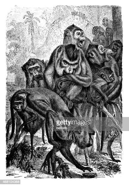group of macaques - group of animals stock illustrations, clip art, cartoons, & icons
