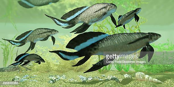 A group of prehistoric Scaumenacia lobe-finned fish from Quebec, Canada in the Devonian period.