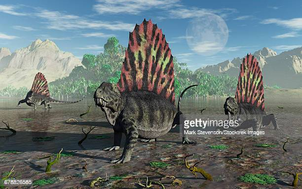 A group of sail-backed carnivorous Dimetrodons during Earths Permian period.