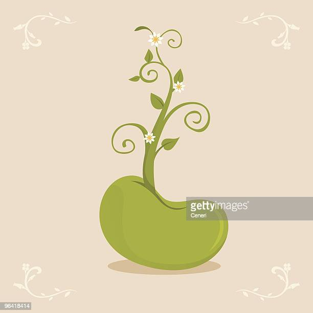 growing bean sprout - bean stock illustrations