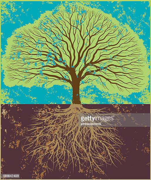 grunge oak in leaf - root stock illustrations, clip art, cartoons, & icons