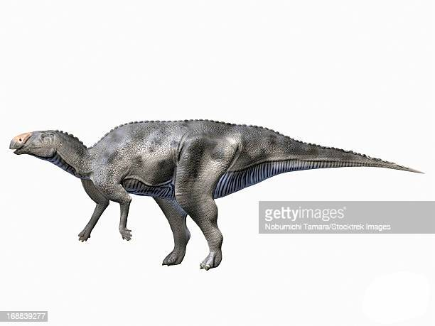 hadrosaurus foulkii, late cretaceous of new jersey. - hadrosaurid stock illustrations, clip art, cartoons, & icons