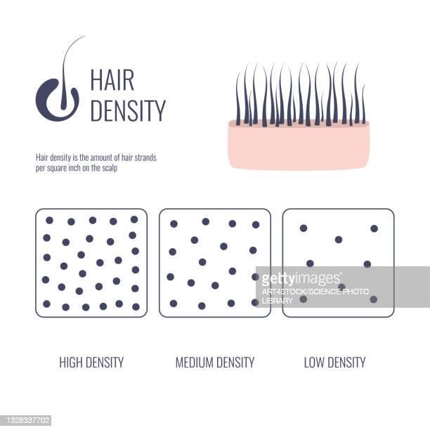 hair density, illustration - human scalp stock illustrations