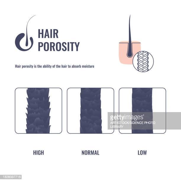 hair porosity, illustration - collagen stock illustrations