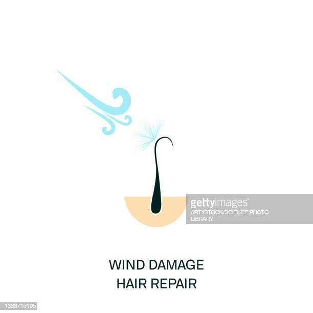 hair protection, conceptual illustration - stratum corneum stock illustrations