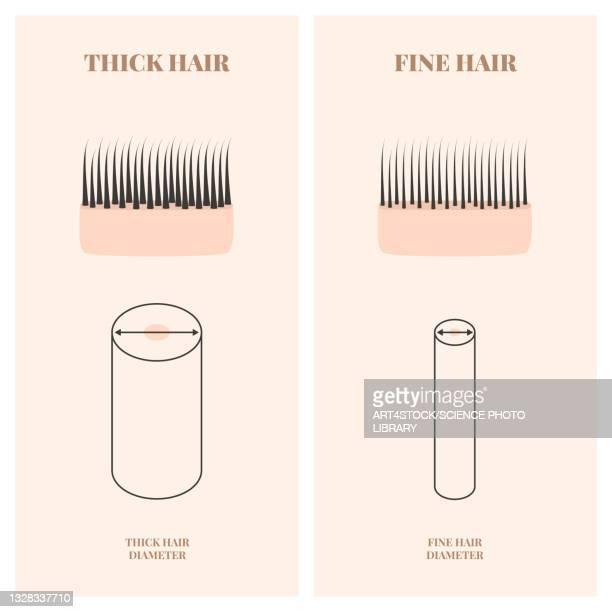 hair thickness, illustration - collagen stock illustrations