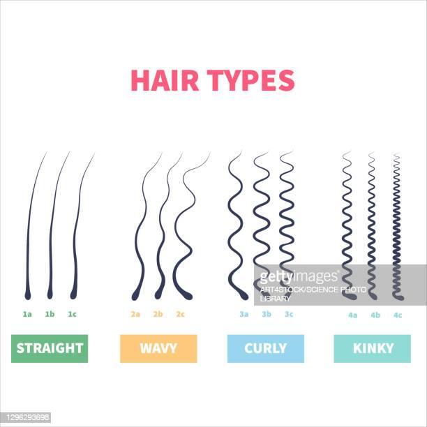 hair types, illustration - hair follicle stock illustrations