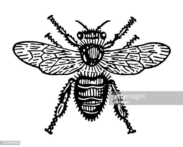 hairy insect - fly insect stock illustrations, clip art, cartoons, & icons
