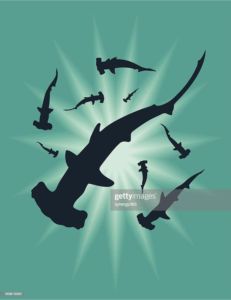 Hammer Head Sharks