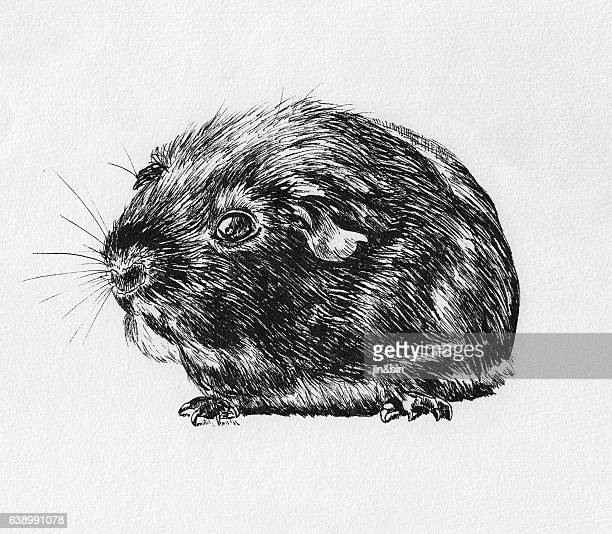 hamster sketch hand drawn illustration on white background
