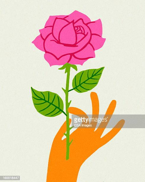 hand holding a pink rose - plant stem stock illustrations