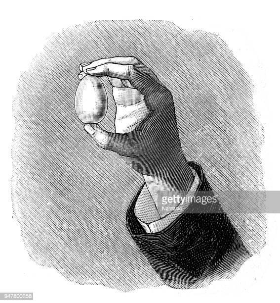 ilustrações, clipart, desenhos animados e ícones de mão segurando um ovo - gravura