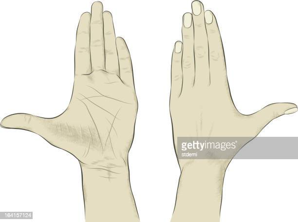 illustrazioni stock, clip art, cartoni animati e icone di tendenza di mano - dorso mano