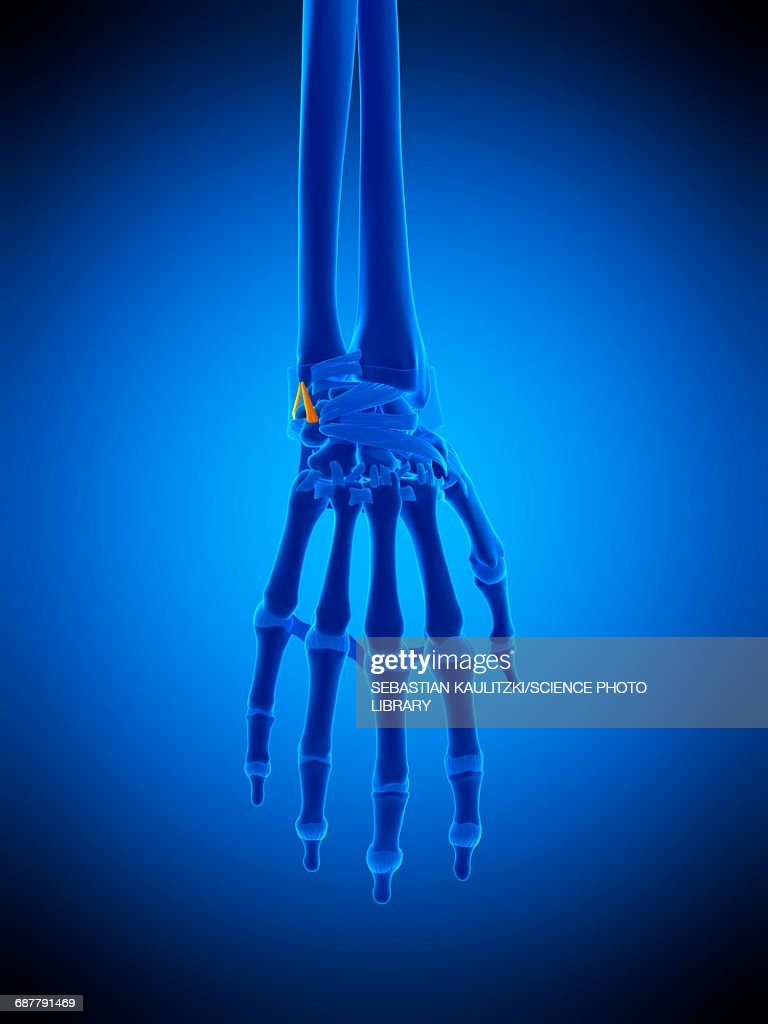Hand Ligaments Illustration Stock Illustration Getty Images