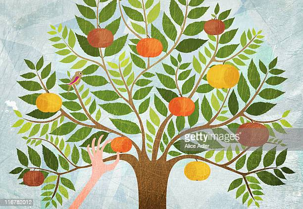 A hand picking an apple from a tree