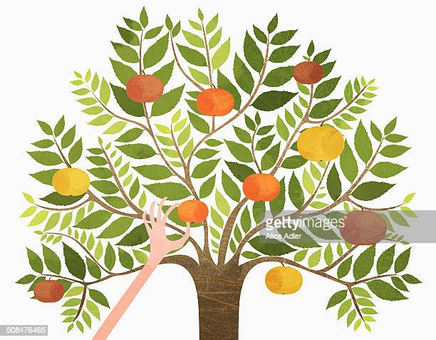 A hand picking orange from tree over white background