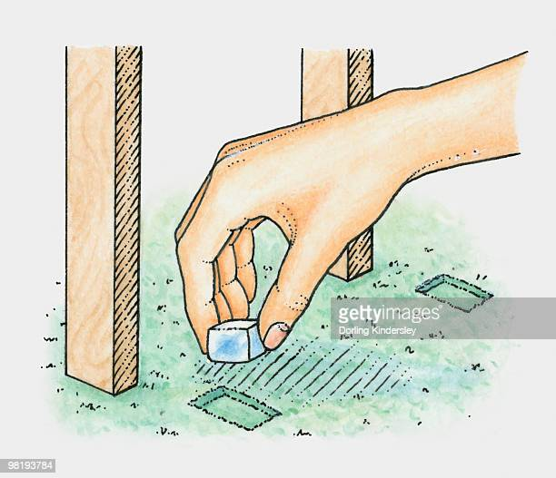Hand placing ice cube into dent in carpet caused by legs of table or chair (removing dent in carpet)