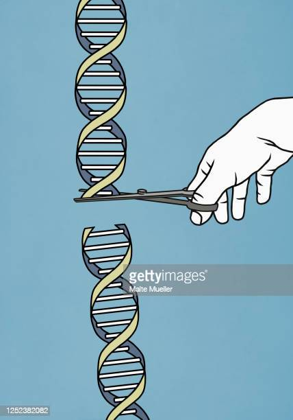hand with scissors cutting double helix - genetic modification stock illustrations