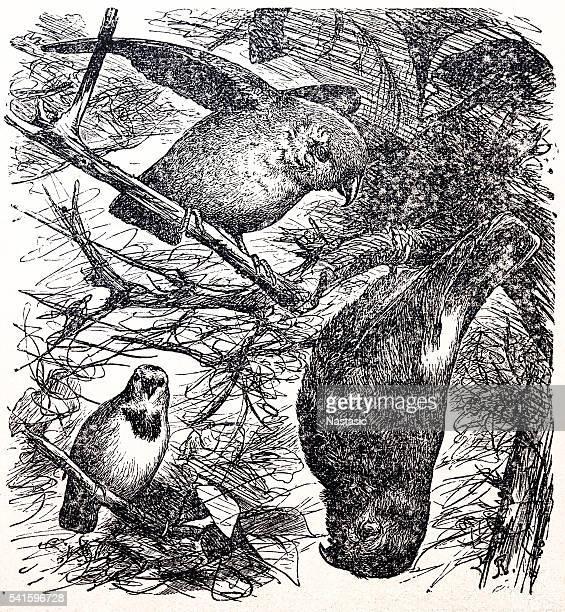 Mão desenhar os papagaios sentado sobre uma ramificação ('branch')