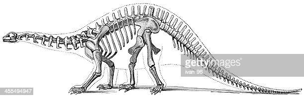 Hand-drawn illustration of a brontosaurus skeleton