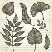 Hand-Drawn Leaves on Old Paper