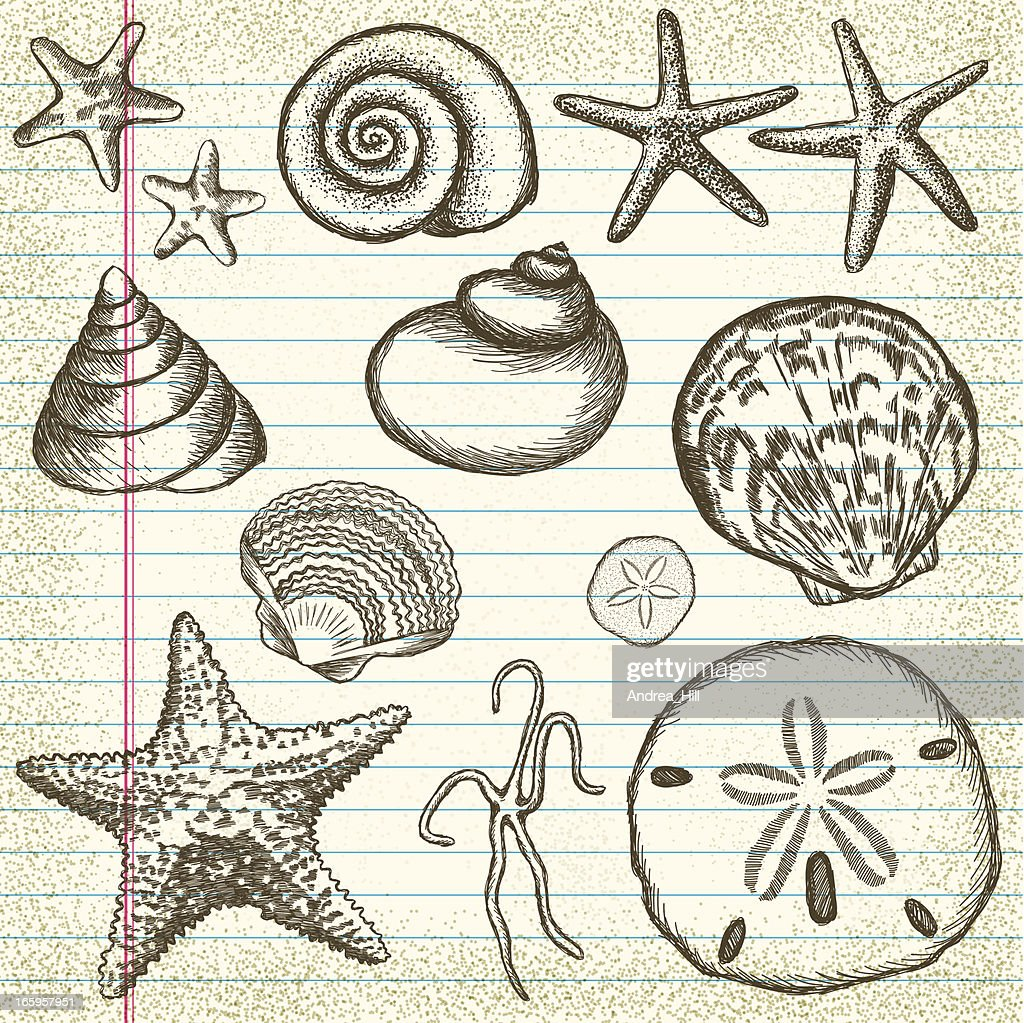 Hand-Drawn Set of Sea Shells on Old Paper