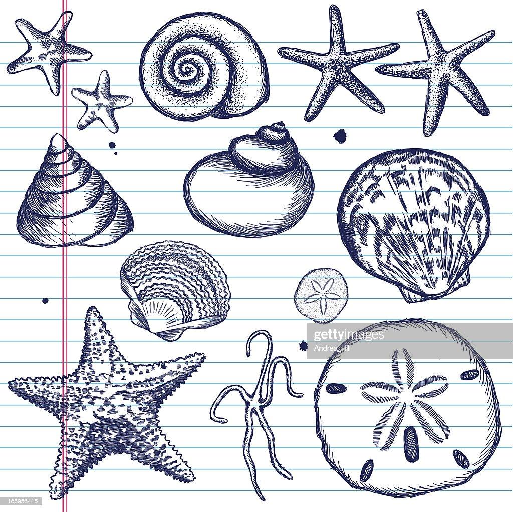 Hand-Drawn Set of Sea Shells on Paper