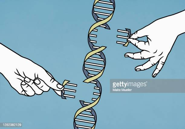 hands dismantling double helix - dismantling stock illustrations