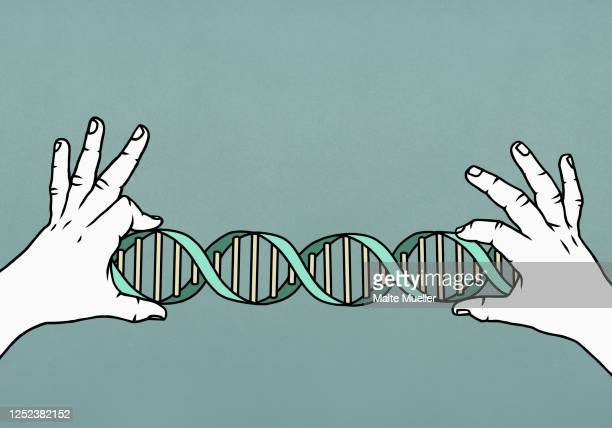 hands holding double helix - genetic research stock illustrations