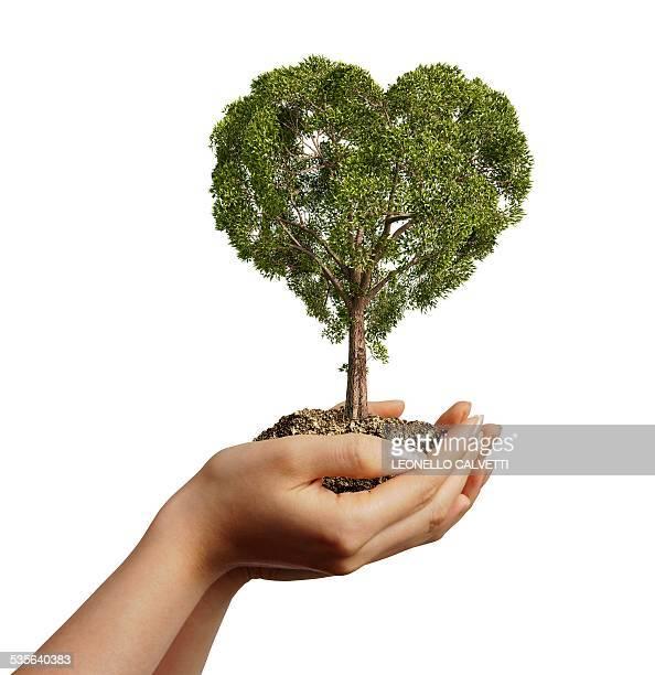 hands holding heart shaped tree, artwork - development stock illustrations