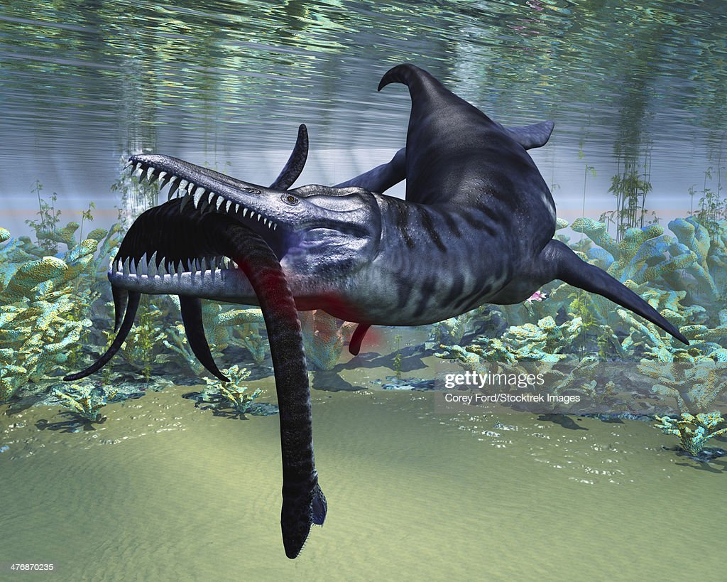 A hapless Plesiosaurus becomes a meal for the much larger Liopleurodon aquatic reptile. : stock illustration