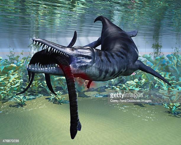 ilustraciones, imágenes clip art, dibujos animados e iconos de stock de a hapless plesiosaurus becomes a meal for the much larger liopleurodon aquatic reptile. - plesiosaurio