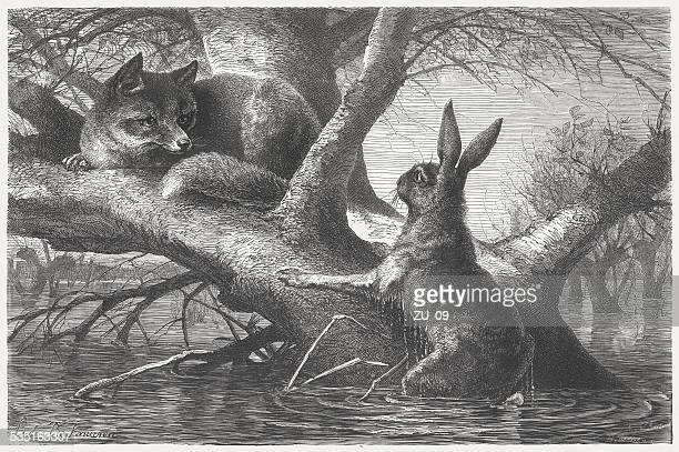 Hare and Fox during the flood, wood engraving, published 1871