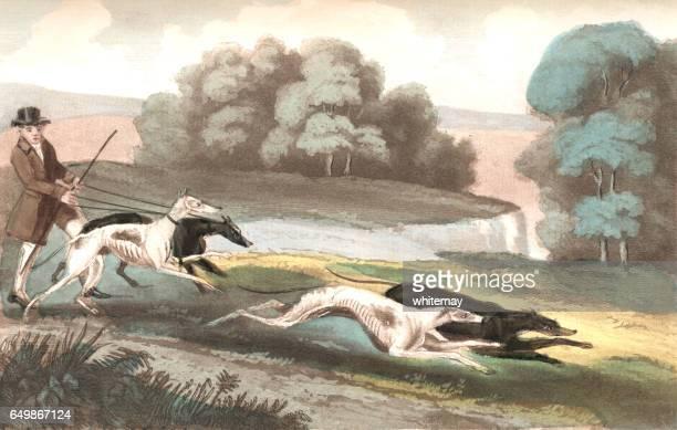 ilustraciones, imágenes clip art, dibujos animados e iconos de stock de liebre corriendo con perros - galgo